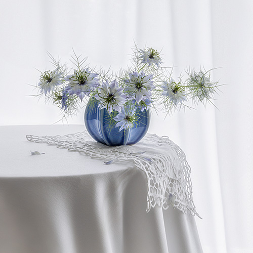 Love-in-the-Mist in blue vase